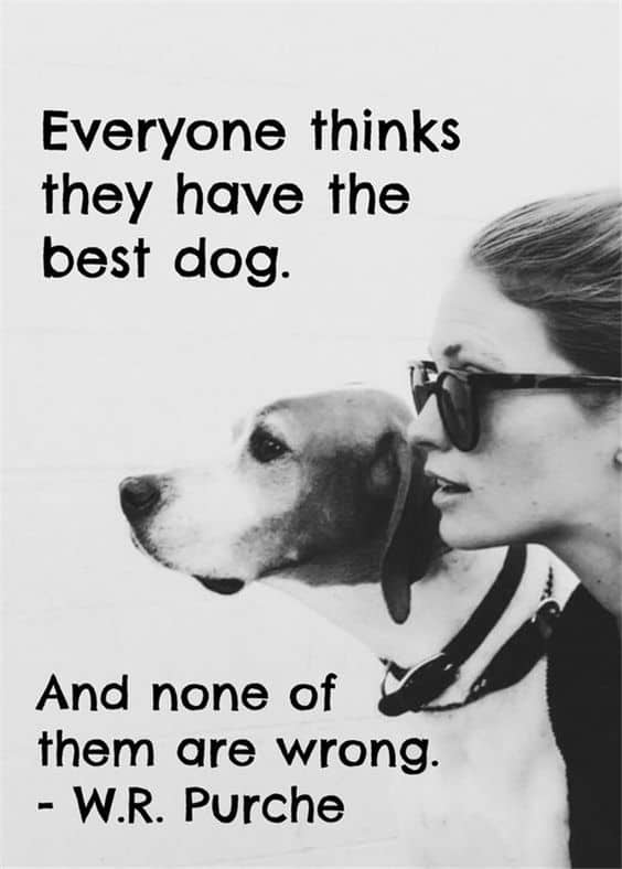 Greatest Dog Quotes And Sayings With Images